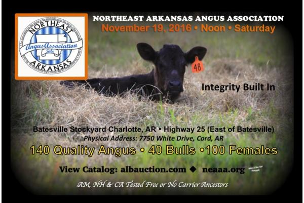 Northeast Arkansas Angus Association Fall Sale